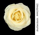 white rose on black background | Shutterstock . vector #444199462