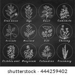 set of spices  medicinal herbs... | Shutterstock .eps vector #444259402
