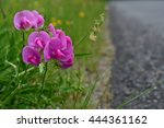 Roadside Flowers  Weeds And...