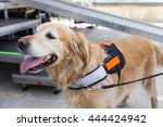an assistance dog is trained to ... | Shutterstock . vector #444424942