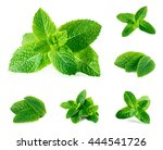 Fresh Mint Isolated On White....
