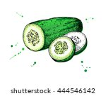 cucumber hand drawn vector.... | Shutterstock .eps vector #444546142