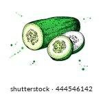 cucumber hand drawn vector....   Shutterstock .eps vector #444546142
