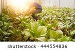 soft image man harvest organic