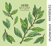 collection of bay leaf. hand... | Shutterstock .eps vector #444585652
