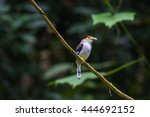colorful bird silver breasted... | Shutterstock . vector #444692152