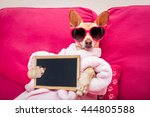 chihuahua dog relaxing  and... | Shutterstock . vector #444805588