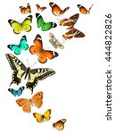 colorful butterflies. isolated... | Shutterstock . vector #444822826
