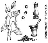 black pepper plant set. hand... | Shutterstock . vector #444890515