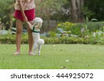 dog playing with owner | Shutterstock . vector #444925072