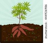 Planting Manioc And Compost....