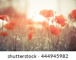 wild poppies at summer meadow | Shutterstock . vector #444945982
