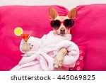Stock photo chihuahua dog relaxing at spa wellness center wearing a bathrobe and funny sunglasses drinking a 445069825