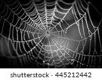 water spot on the spider net | Shutterstock . vector #445212442