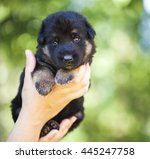 human hands hold german... | Shutterstock . vector #445247758