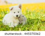 Stock photo kitten cuddle to a puppy on dandelion field 445370362