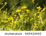 Flower Background With Yellow ...