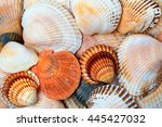 Shells Of Anadara And Scallops...