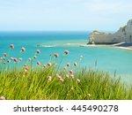 Wild Flowers On The Seacoast...