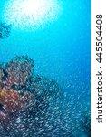 school of luminous cardinalfish | Shutterstock . vector #445504408