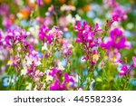 Small photo of Texture of little colorful flowers with Linaria on summer in park,Tokyo, Japan.