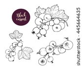 hand drawn black currant stems... | Shutterstock .eps vector #445664635