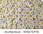 beautiful flowers daisy lying... | Shutterstock . vector #445672978