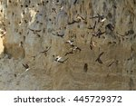 Colony Of Birds In The Sand Pit