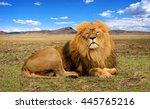 wildlife in africa. stunning... | Shutterstock . vector #445765216