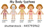 different systems in human... | Shutterstock .eps vector #445793962