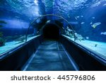 Empty Oceanarium Tunnel  Closeup