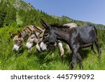 Curious Funny Donkeys With...