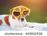 Dog Sunning In Glasses  Hidden...
