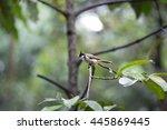 bird at jurong bird park   Shutterstock . vector #445869445