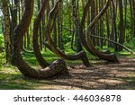 The Crooked Forest. Oddly...