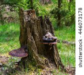 Tree Forest Timber Wood Stump...