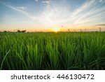 Paddy Field With Sunrise In...