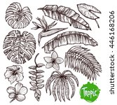 hand drawn tropical leaves and