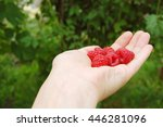 a female hand with raspberries | Shutterstock . vector #446281096