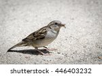 a sparrow  passeridae  eating... | Shutterstock . vector #446403232