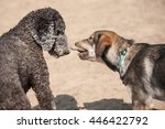 Dogs Playing Tug Of War With A...