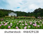 Curcuma Flowers In Front Of...