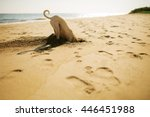 Stock photo dog digging sand at the beach 446451988