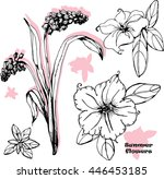 vector set of  petunias and... | Shutterstock .eps vector #446453185