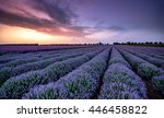 beautiful image of lavender... | Shutterstock . vector #446458822