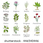 set of spices  medicinal herbs... | Shutterstock .eps vector #446540446