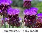 Flower Head Of Cynara Scolymus...