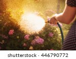 Woman Watering A Plant In The...