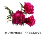 red peony flowers | Shutterstock . vector #446833996