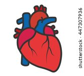 realistic heart icon isolated... | Shutterstock .eps vector #447307936